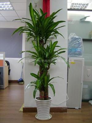 杭州双华园艺植物租赁有限公司 花卉租摆 植物租售
