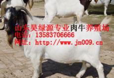 山東波爾山羊肉羊品種價格 波爾山羊養殖場