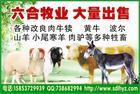 波尔山羊 杜泊绵羊 肉牛出售 山东牛羊养殖繁育总场