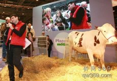 山东养殖网奶牛发情四个周期奶牛人工受精技术的推广