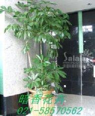 上海绿色植物租赁上海盆景花卉植物出租上海租植物公司