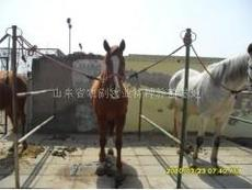 馬 養馬 養馬技術 養馬知識 純血馬 伊犁馬 養馬場