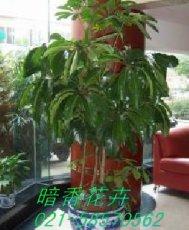 上海室内景观设计公司上海植物出租租赁公司租售花草盆景