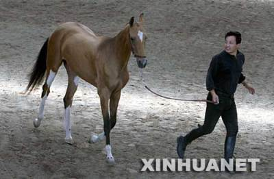 买纯种汗血马 汗血宝马图片介绍 北京燕龙