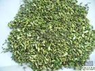 大量收购日照槐米 干燥槐米 新鲜槐米 青州利达农产品