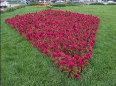 園藝花卉批發