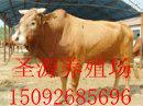 承德哪里有賣牛的承德哪里能買到牛承德什么地方有賣牛的