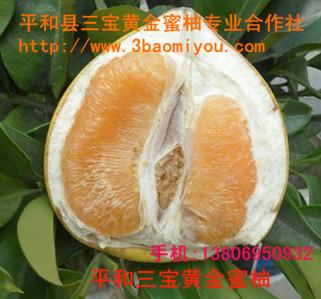 蜜柚品种 平和三宝蜜柚
