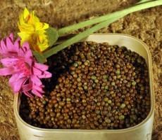 低价供应现磨豆浆烘焙原料 绿豆