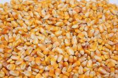 正太现款求购玉米小麦大豆油糠碎米麸皮鱼粉等饲料原料