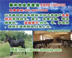 改良肉驢 改良成年驢山東順和牧業養殖基地