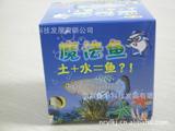 神奇魔法魚 觀賞魚 鳉魚