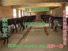 肉驢養殖場 肉驢養殖基地山東順和牧業養殖基地