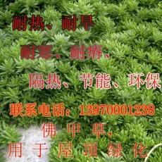 佛甲草用于屋顶绿化