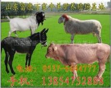 武安養牛場%武安大型養牛場