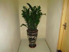 广州办公室内绿植租摆低至500元/月