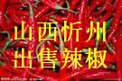 山西忻州市晋北辣椒种植基地 辣椒急待销售
