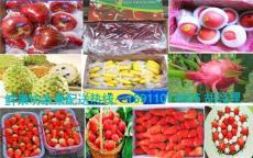 进口珍珠芭乐槟榔菠萝蜜凤梨释迦鲜果坊水果批发