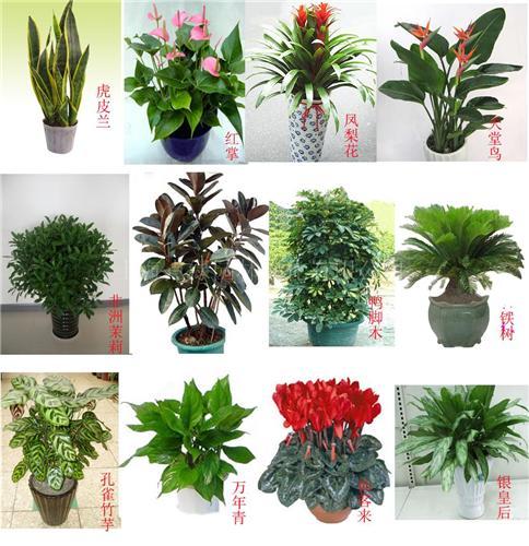 上海/办公室绿化中型植物花卉
