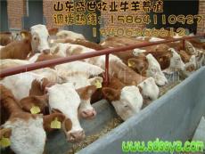 黑龍江哪有牛養殖場 養牛成本