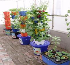 立体式阳台种菜设备