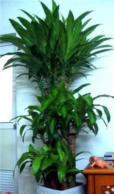 杭州租花公司 室内植物出租公司