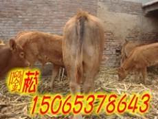 安徽省有沒有小尾寒羊養殖基地/合肥小尾寒羊價格