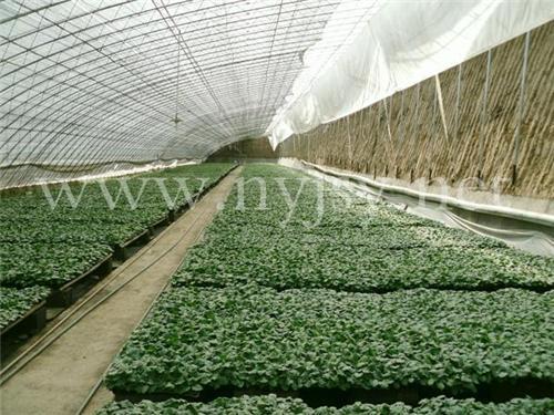 寿光蔬菜大棚图片_蔬菜温室大棚设计图纸_中科商务网